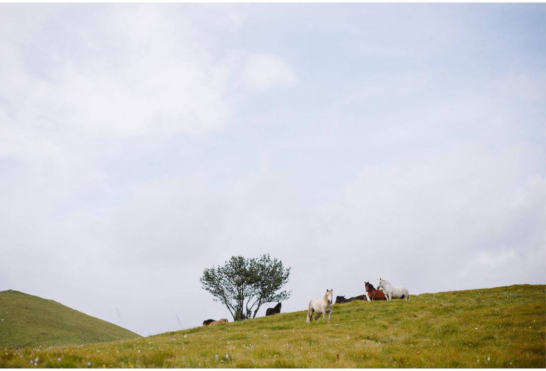 hahlici wild horses
