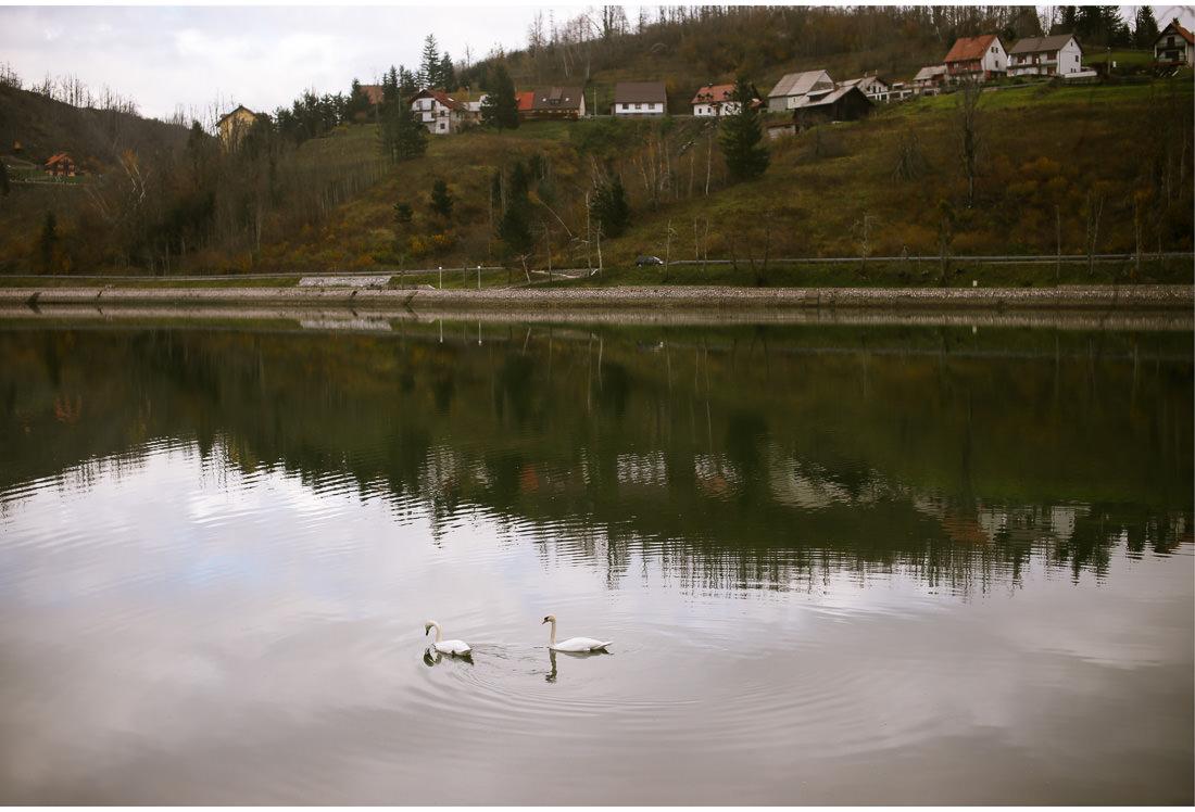 swans in fuzine