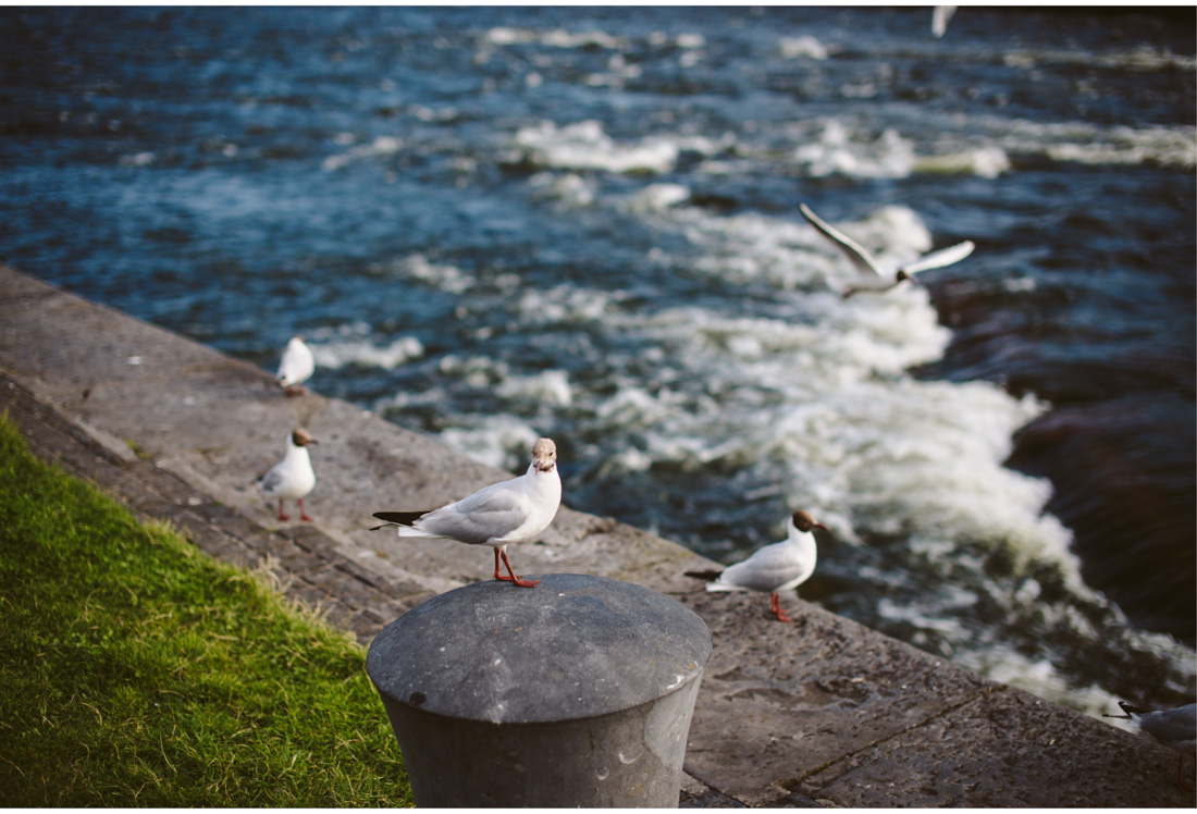 galway seagull