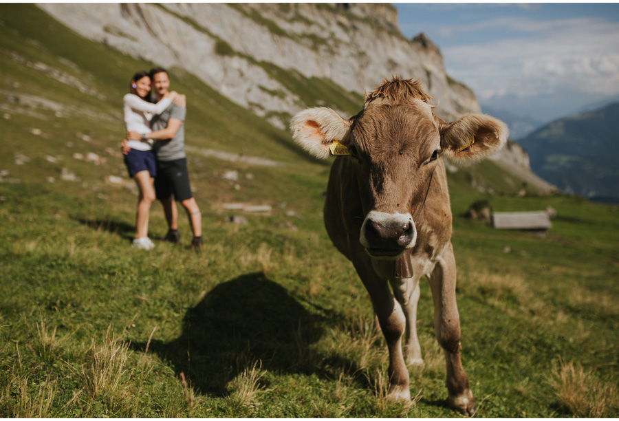 cow in swiss alps engagement
